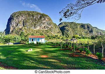 vinales, -, panorama, cuba, vallée
