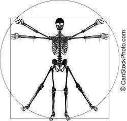 vinci, da, vitruvian, scheletro, uomo