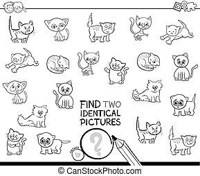 vinden, twee, identiek, katje, afbeeldingen, kleurend boek