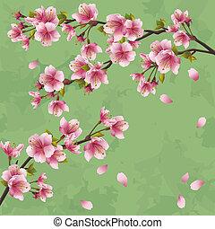 vindima, árvore, japoneses, sakura, fundo, cereja