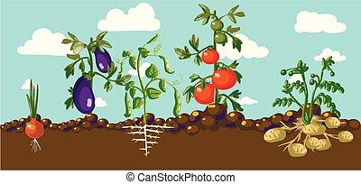 vindima, bandeira, jardim, raiz, veggies