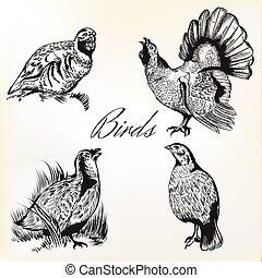 vindima, cobrança, mão, vetorial, desenhado, pássaros, style.eps