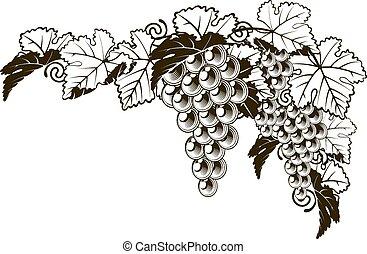 vindima, estilo, desenho, uvas