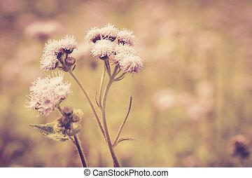 vindima, flor, prado, retro
