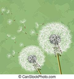 vindima, floral, fundo, com, dandelion