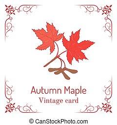 vindima, folhas, outono, maple, ramo, seeds., cartão