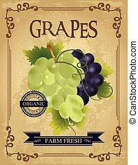 vindima, fresco, uvas, cartaz