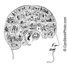 vindima, ilustração, phrenology