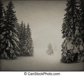 vindima, paisagem inverno, em, a, floresta