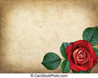 vindima, parabéns, cartão, rosa vermelha