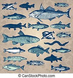 vindima, peixe, jogo, (vector)
