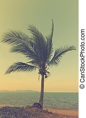 vindima, praia, palma, pôr do sol, árvores