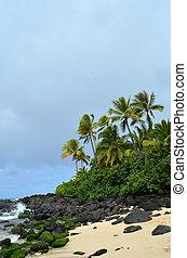 vindpinad, strand