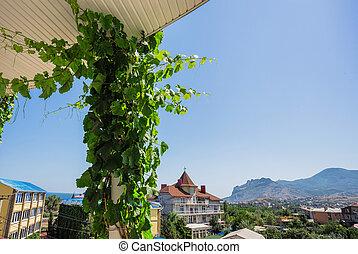 vine against the sky