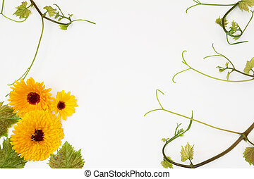 vine and flowers of calendula