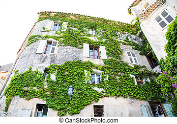 Vine Covered Old Stone Wall