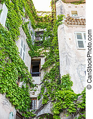 Vine Covered Stone Wall