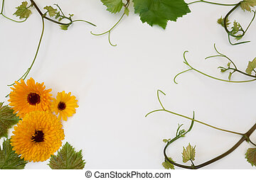 vine grapes and flowers of calendula