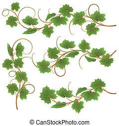 Vine - Set from vine on a white background