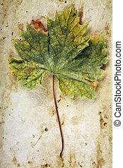 Vine Leaf on Old Paper