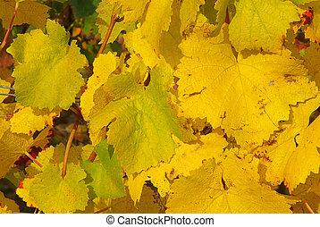 vine leaves 02
