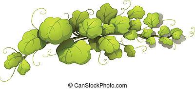 Vine leaves - Illustration of the vine leaves on a white...