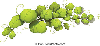 Vine leaves - Illustration of the vine leaves on a white...
