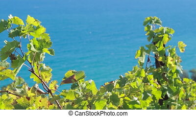 vine on a background of blue sea