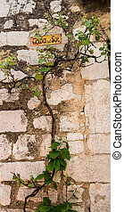 Vine on Rock Wall of House