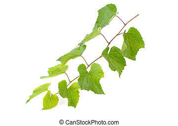 vine on white background