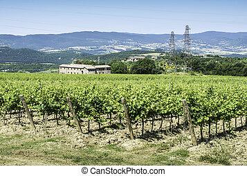 Vine plantations and farmhouse in Tuscany.