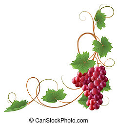 Vine - Red vine on a white background