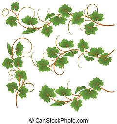 Vine - Set from vine on a white background