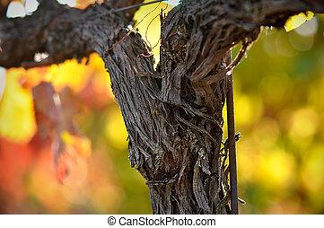 Vine - Close up of a Red Grape Wine Vine