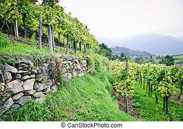 Vine Terrace