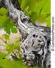 Vine trunk and leaves details- abstract mood