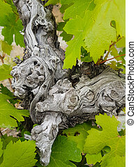 Vine trunk and lush leaves details- abstract mood