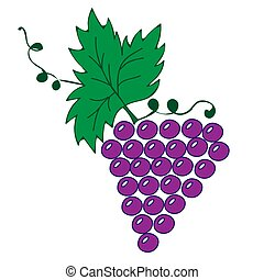 Vine with leaves and grapes illustration on the white background