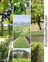 vines and vine shoots