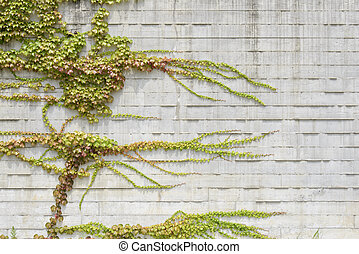 vines climbing on white wall