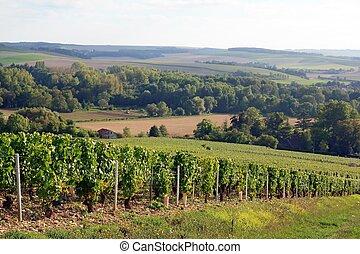 Vines near Auxerre Burgundy France