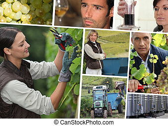vines, stainless tanks, wine producers and oenologists