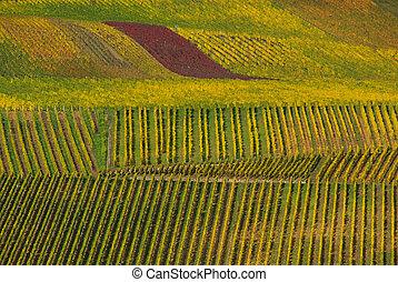 vineyard 22