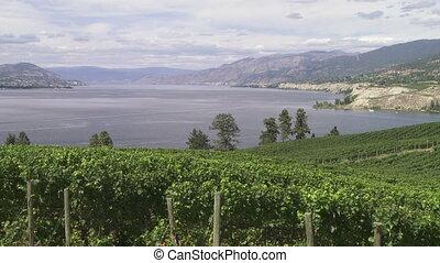 Vineyard above Lake Okanagan - Pan right of Lake Okanagan...