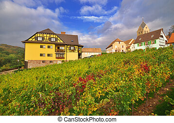 Vineyard after Rain