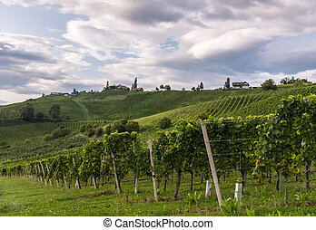 Vineyard along the south Styrian vine route in Austria