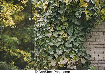 vineyard and brick wall