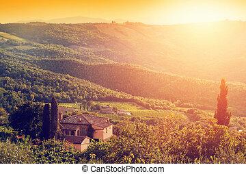 Vineyard and farm house, villa in Tuscany, Italy at sunset