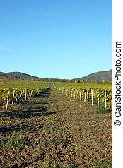 Vineyard and hills landscape autumn season agriculture
