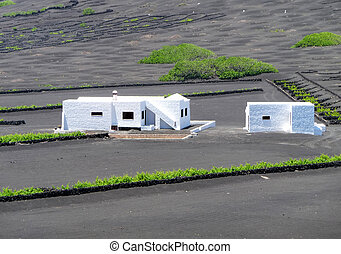 vineyard and house in Lanzarote